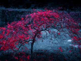 обои Красное дерево в серой мгле фото