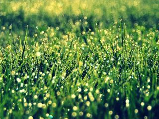 обои Трава в серебряной росе фото