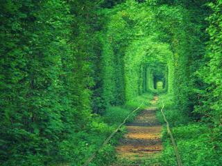 обои для рабочего стола: Светлый зеленый тоннель