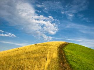 обои Желто зеленый холм фото