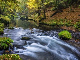 обои Лесной буйный ручей фото