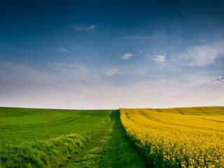 обои Желто зеленое бескрайнее поле фото