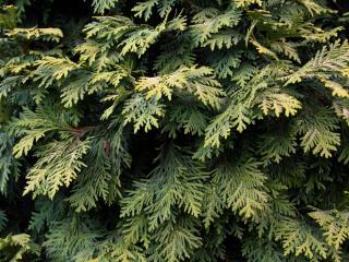 обои Заросли зеленой листвы фото