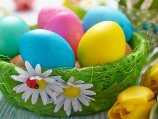 обои Крашенные яйца и желтые тюльпаны фото