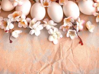 обои Птичьи яйца и плодовые цветы фото