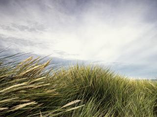 обои для рабочего стола: Высокая трава на ветру