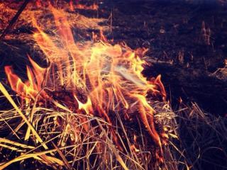 обои для рабочего стола: Весенний огонь