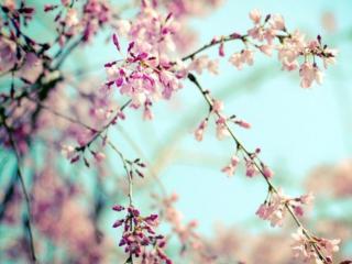 обои для рабочего стола: Весна расцветает