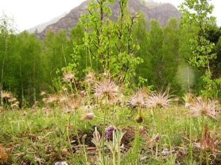 обои для рабочего стола: Алтайская весна