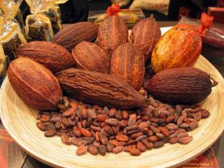 обои Какао-бобы сорт Форастеро фото