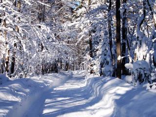 обои Дорога в снежном лесу фото