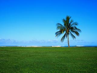 обои Одинокая пальма на берегу океана фото