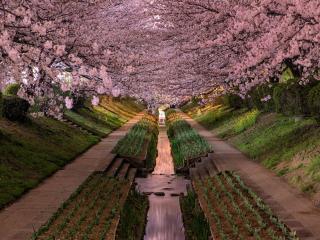 обои для рабочего стола: Весенняя Япония. Префектура Канагавы