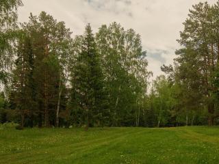 обои Лес весенний фото