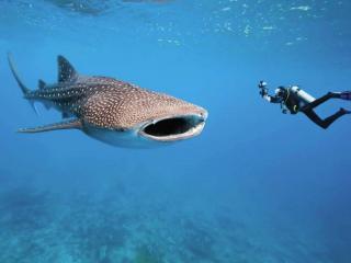обои для рабочего стола: Мальдивы. Подводные обитатели