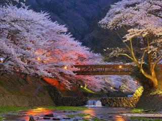 обои для рабочего стола: Весенний вечер в парке Японии