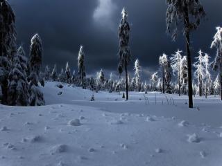 обои Зимняя ночь в редком лесу фото