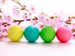 обои Четыре яйца и цветущая ветка вишни фото