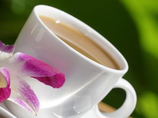 обои Чашка кофе и распустившийся цветок фото