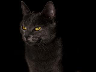 обои Черный кот в темноте фото