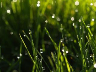 обои Серебрянные капли на кончиках травы фото