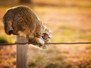 обои Кошка на столбе играет с веревкой фото