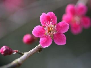 обои для рабочего стола: Розовый цветок расцвёл на ветке
