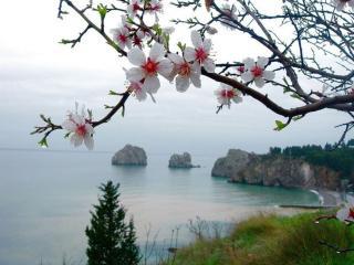 обои Весеннее утро на озере фото