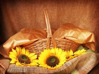 обои Натюрморт - Золотистое и жёлтое фото