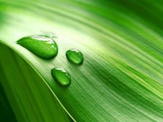 обои Капли на зелёном листке фото