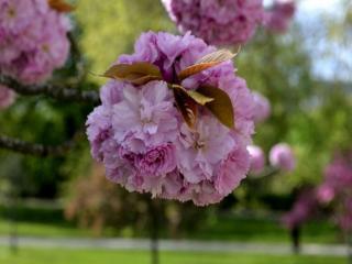 обои для рабочего стола: Цветущий весенний парк