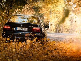 обои BMW заметает дорогу листвой фото