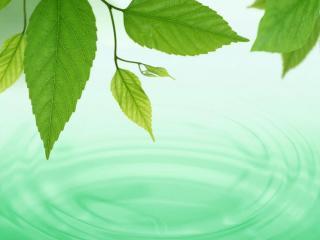 обои Зеленые листья над бирюзовой водой фото