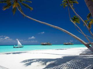 обои Гамак у пальмы на пляже фото
