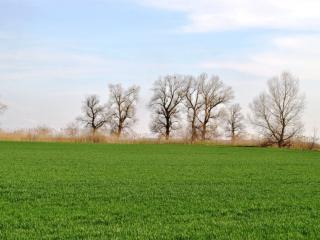 обои Весенняя поляна фото