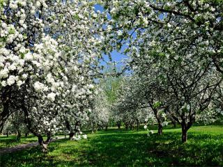 обои для рабочего стола: Когда цветут сады