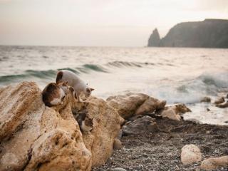 обои Крымские кошечки у моря фото