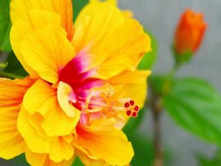 обои Распустившийся ярко-желтый цветок фото