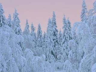 обои Деревья в теплых снежных шубах фото