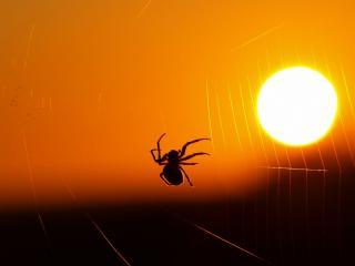 обои Яркая добыча паука фото