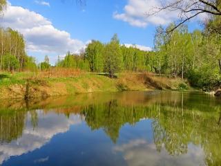 обои Весна на лесном озере фото