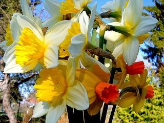 обои Цветы победителям фото