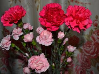 обои Цветы победы фото