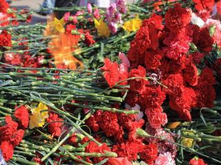 обои Цветы у Вечного огня фото