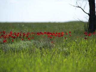 обои Калмыкская весна, цветут цветы фото