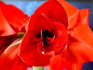 обои Огненный цветок фото