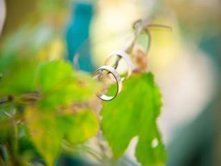 обои Обручальные кольца весны фото