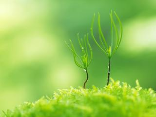 обои Танец двух травинок фото