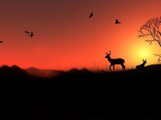 обои Отдых оленей на закате фото