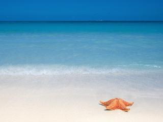 обои для рабочего стола: Одинокая звезда на белом песке